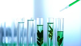 Scientist dripping green liquid in lab tubes, herbal anti-age cosmetics testing. Stock photo stock images