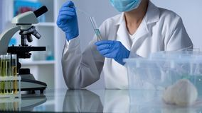 Scientist dripping test liquid in tube, developing new medicine, rodents testing stock images