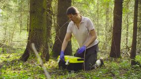 Scientist ecologist in the forest taking samples of plants. Scientist ecologist in the forest opening toolbox, then taking samples of the moss with tweezers and stock video footage