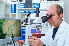 Scientist examines biopsy samples stock photo