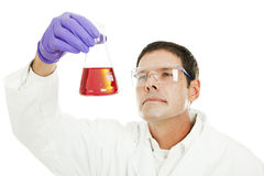 Scientist Examines Liquid Compound. Scientist examining the clarity of a liquid compound in a flask. Isolated on white Royalty Free Stock Photography
