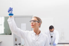 Scientist examining blue precipitate in baker Royalty Free Stock Images