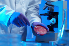 Scientist examining culture sample Royalty Free Stock Photos