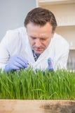 Scientist examining grass Royalty Free Stock Photo