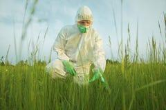Scientist examining green plants on summer field Stock Image