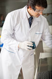 Scientist Examining Green Solution In Flask Royalty Free Stock Photos