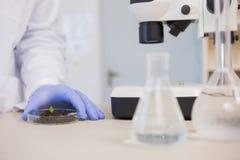 Scientist examining leaf in petri dish Stock Image