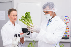 Scientist examining lettuce while colleague writing in clipboard. In the laboratory Royalty Free Stock Photos