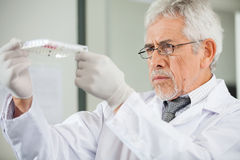 Scientist Examining Microplate In Laboratory Royalty Free Stock Photo