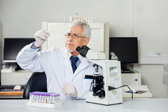 Scientist Examining Microscope Slide In Lab Royalty Free Stock Images