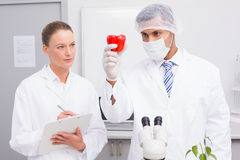 Scientist examining peppers while colleague writing in clipboard. In the laboratory Stock Photography