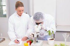 Scientist examining peppers with microscope while colleague writing in clipboard Stock Images