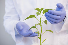 Scientist examining plants Stock Images