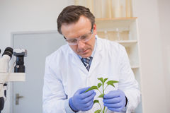 Scientist examining plants Royalty Free Stock Photos
