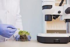 Scientist examining plants in petri dish Stock Photo