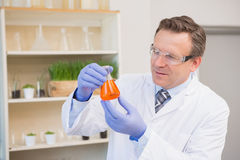 Scientist examining precipitate in flask Stock Photography