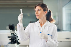 Scientist Examining Sample In Test Tube Stock Photography