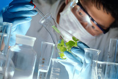 Scientist examining samples with plants royalty free stock photo