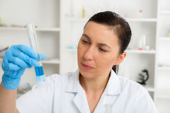 Scientist examining solution in petri dish at a laboratory Royalty Free Stock Photos