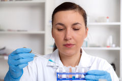Scientist examining solution in petri dish at a laboratory Stock Photo