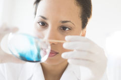 Scientist Examining Solution In Petri Dish At Laboratory stock photo