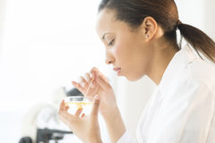 Scientist Examining Solution In Petri Dish At Laboratory. Side view of female scientist examining solution in petri dish at laboratory Stock Image
