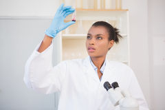 Scientist examining test tube Stock Photography