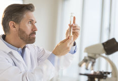 Scientist Examining Test Tube In Laboratory. Side view of mature male scientist examining test tube in laboratory Royalty Free Stock Photos
