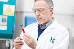 Scientist examining a test tube Royalty Free Stock Images