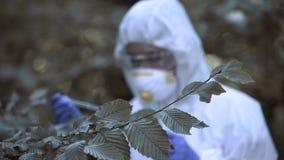 Scientist examining tree leaf reaction dripping liquid radioactive contamination
