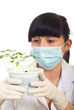 Scientist female with new plants Royalty Free Stock Image