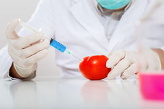 Scientist genetically modifying fruits and vegetables in the laboratory Stock Images