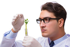 The scientist with green seedling in glass isolated on white Royalty Free Stock Image