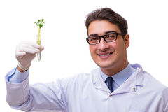 The scientist with green seedling in glass isolated on white Royalty Free Stock Photography