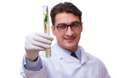 The scientist with green seedling in glass isolated on white Stock Photo