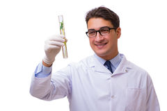 The scientist with green seedling in glass isolated on white Stock Image
