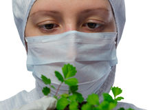 Scientist hands holding a plant on white. Scientist examines the leaves of the plant on white Royalty Free Stock Photography