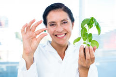 Scientist holding basil plant and pill Royalty Free Stock Photography