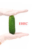 Scientist holding cucumber which is growing E.coli Stock Image