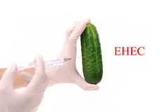 Scientist holding cucumber which is growing E.coli Royalty Free Stock Photography