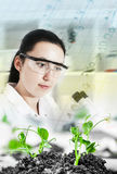 Scientist holding and examining samples plants royalty free stock photo