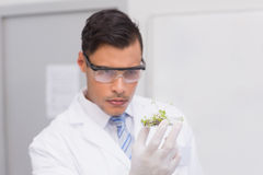 Scientist holding a petri dish with tests of plants Stock Photos
