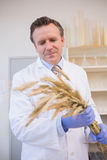 Scientist holding sheaf Stock Photography