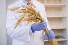 Scientist holding sheaf Stock Photos