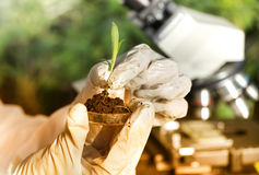 Scientist holding sprout above petri dish Royalty Free Stock Photos