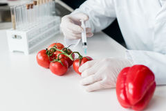 Scientist holding syringe and making experiment with vegetables in lab. Cropped shot of scientist holding syringe and making experiment with vegetables in lab Stock Photos