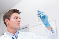 Scientist holding test tube with corn inside Stock Images