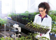 Scientist holding tray with seedlings Royalty Free Stock Photos