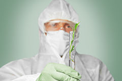 Scientist holds flask with green plant Royalty Free Stock Photography
