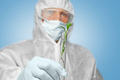 Scientist holds tube with green plant Royalty Free Stock Image